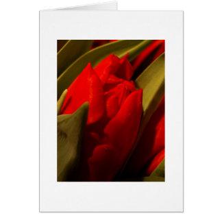 Tarjeta roja del tulipán