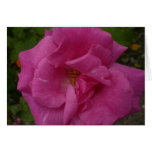 Tarjeta rosada de la flor el |