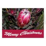 Tarjeta rosada de las Felices Navidad de la flor d