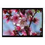 Tarjeta rosada de las flores de cerezo