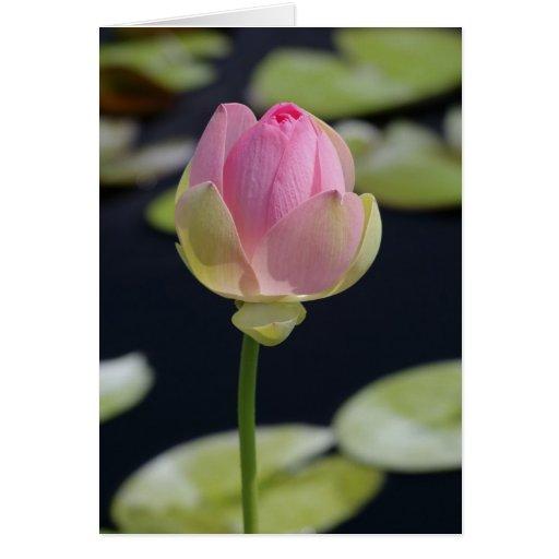 Tarjeta rosada de Lotus