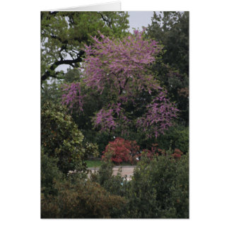 Tarjeta rosada del árbol