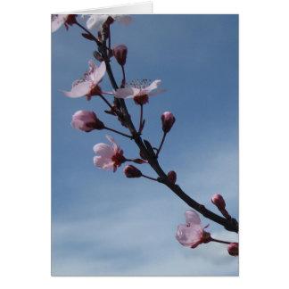 Tarjeta rosada del árbol floreciente de la flor de