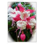 Tarjeta rosada y blanca de Fuschia