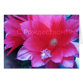 Tarjeta rusa de las Felices Navidad, cactus de nav