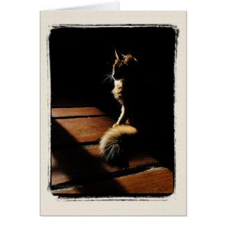 Tarjeta somalí de la silueta del gato