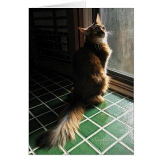 Tarjeta somalí imponente del gato