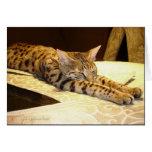 Tarjeta soñolienta del gato de la sabana