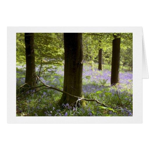 Tarjeta suave de madera del foco del Bluebell