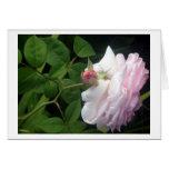 Tarjeta subió y rosada de la plena floración del b