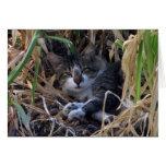 Tarjeta tímida del feliz cumpleaños del gato del m