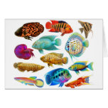Tarjeta tropical de agua dulce de los pescados