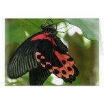 Tarjeta tropical de la mariposa