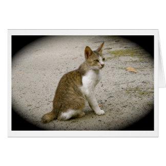 Tarjeta única del gato