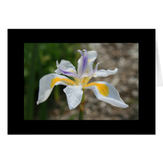Tarjeta y nota blancas de felicitación de la flor