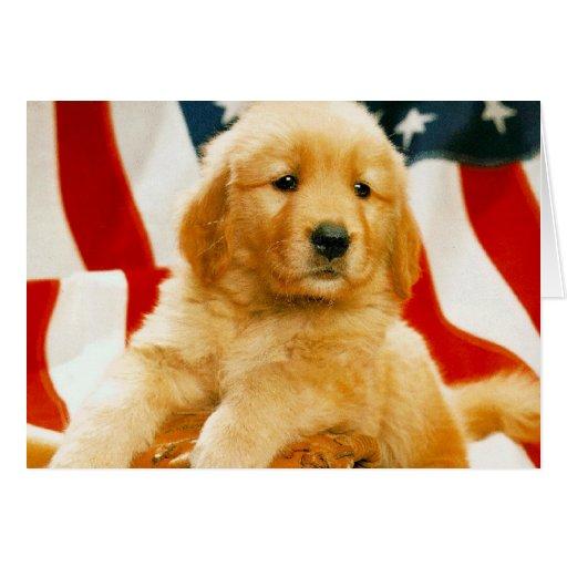 Tarjetas adorables de la fotografía del perro, reg