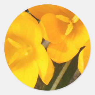 tarjetas amarillas del azafrán etiquetas redondas
