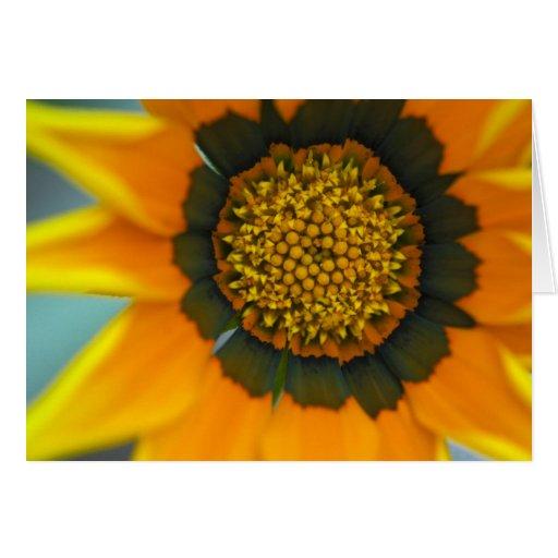Tarjetas anaranjadas de la flor