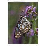 Tarjetas azules de la mariposa