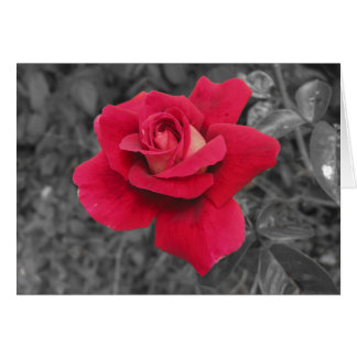 Tarjetas blancas negras del rosa rojo