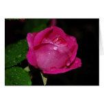 Tarjetas color de rosa cubiertas de rocio