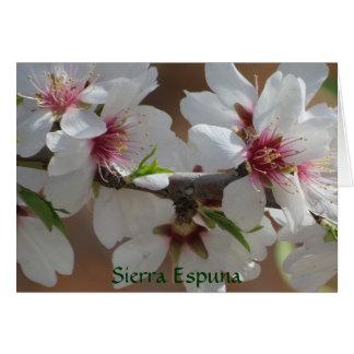 Tarjetas con el flor de la almendra en Sierra Espu