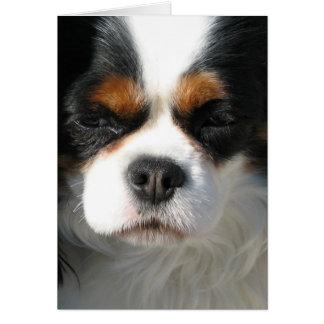 Tarjetas de felicitación adorables del perro de ag