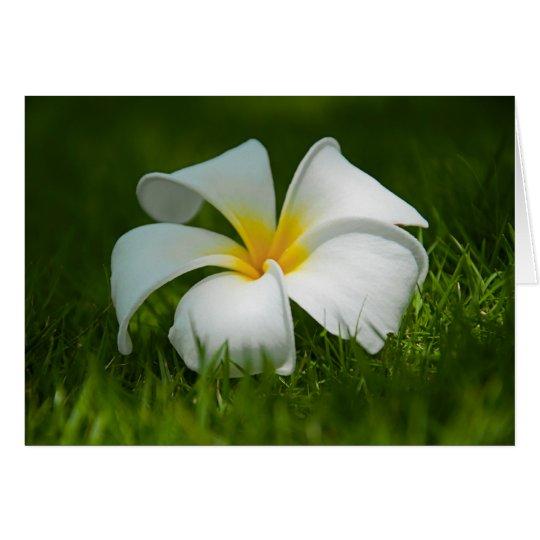 Tarjetas de felicitación de la flor del Frangipani