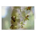 Tarjetas de felicitación de las orquídeas que cuel
