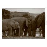 Tarjetas de felicitación del elefante para una cau
