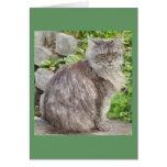 Tarjetas de felicitación del gato de Coon de Maine