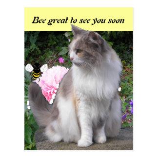 Tarjetas de felicitación del gato postales
