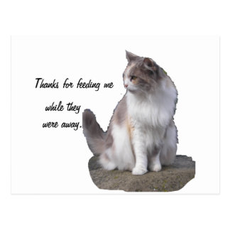 Tarjetas de felicitación del gato tarjeta postal