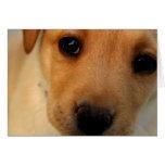 Tarjetas de felicitación del perrito del labrador
