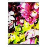 Tarjetas de felicitación en blanco de las orquídea