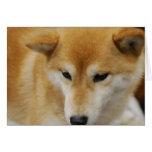 Tarjetas de felicitación lindas de Shiba Inu
