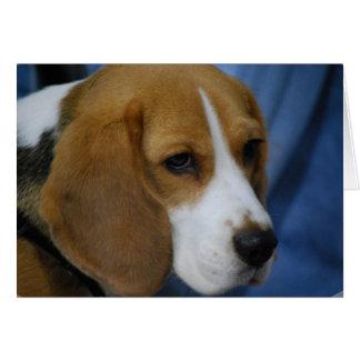Tarjetas de felicitación lindas del beagle