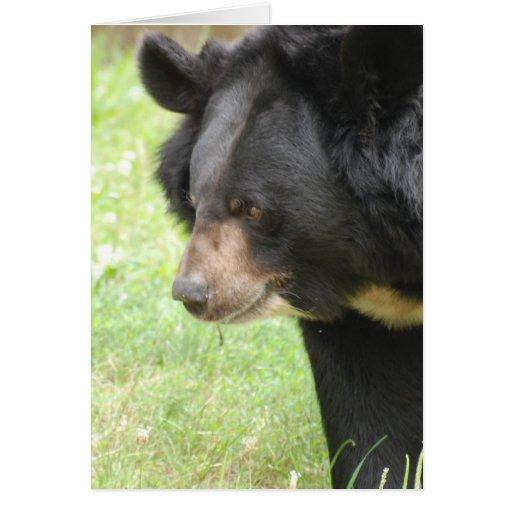 Tarjetas de felicitación lindas del oso negro