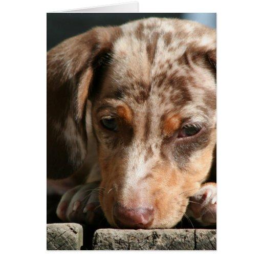 Tarjetas de felicitación lindas del perrito de Das