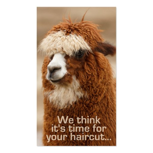 Tarjetas de la cita del hairstylist de la alpaca tarjeta de visita