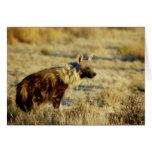 Tarjetas de la fauna del hyena de Brown