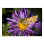 Tarjetas de la mariposa y de las flores