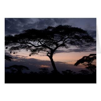 Tarjetas de la puesta del sol de los árboles del a
