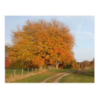 Tarjetas de los árboles del otoño de DSCN6832.JPG Postales