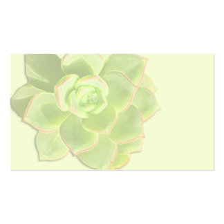 Tarjetas de marfil suculentas verdes del lugar plantilla de tarjeta de negocio