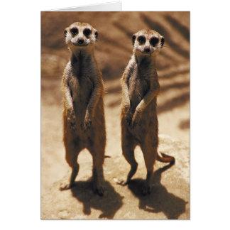 Tarjetas de Meerkat