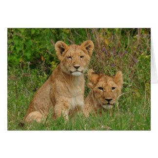 Tarjetas de nota de Cubs de león