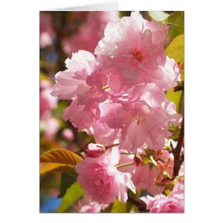 Tarjetas de nota de la flor de cerezo