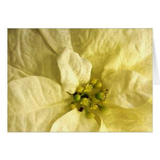 Tarjetas de nota de la flor del mes del nacimiento