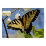 Tarjetas de nota de la mariposa de Swallowtail